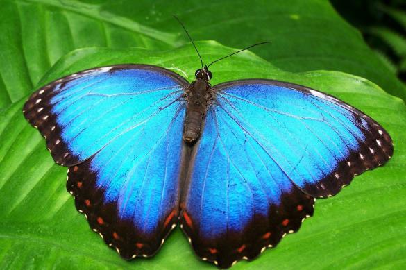 На крыльях бабочек обнаружили защиту от сильных ливней