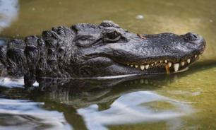 Мужчина задержан за купание крокодила в море