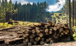 Глава минприроды допустил запрет на экспорт российского леса в Китай