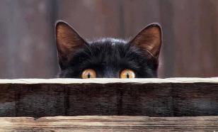 В чем провинилась черная кошка: почему люди верят в приметы