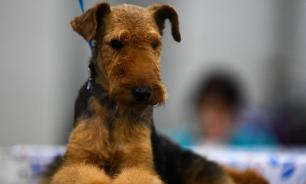 В Нижнем Тагиле спасли собаку, провалившуюся под лёд