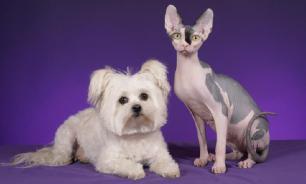 Кошки и собаки  займут свою нишу в нормативной базе России