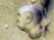 Портрет Махатмы Ганди обнаружили на Марсе