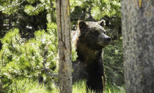 Покусанный медведем житель Тувы рассказал, что откусил зверю язык