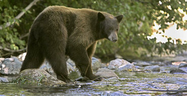 В районе аэропорта в Сибири медведь разорвал мужчину и покалечил его жену