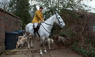 В Ингушетии егерей пересадят на лошадей для патрулирования лесов