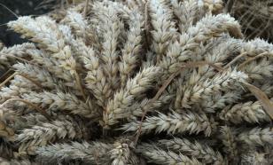 Эксперт: Грузия без зерна не останется