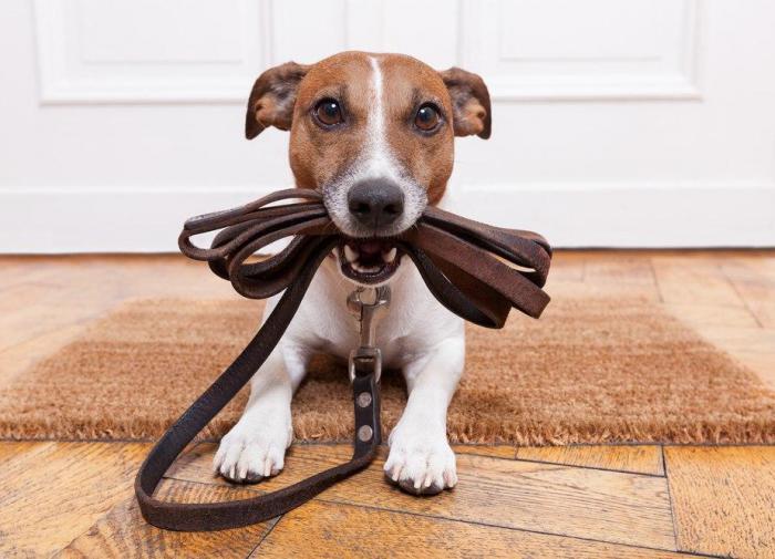 Выпил Не выводи собаку гулять: новая инициатива от Совфеда