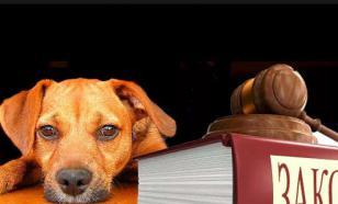 """В приюте для животных рассказали, как живут """"наркоманы"""", съевшие собаку"""