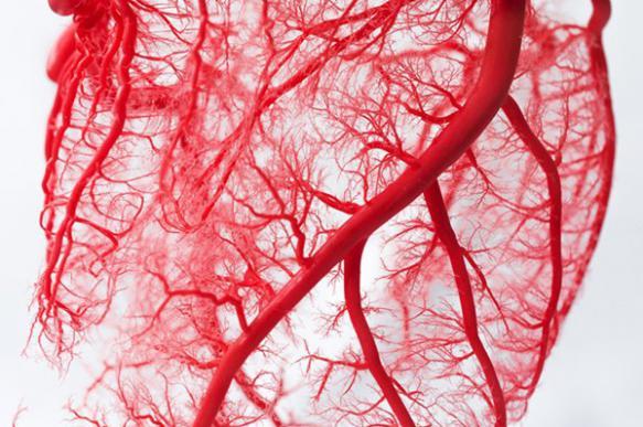 Ученые из США обнаружили способ, как вернуть артериям былую эластичность