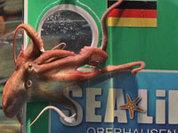 В Германии выбирают нового осьминога-оракула