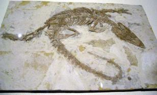 В Перу обнаружили следы схватки древнего крокодила с ленивцем