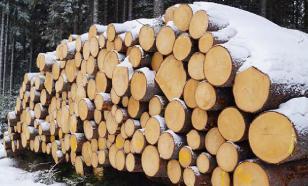В Приморье преступники вывезли в Китай тысячи кубометров леса