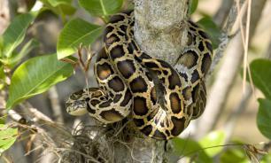 Разводившую змей 36-летнюю женщину обнаружили мертвой с питоном на шее