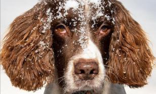 "В Великобритании орден ""За заслуги"" вручили домашней собаке"