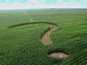 Россия не сможет обойтись без ГМО?