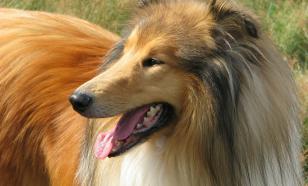 Финские учёные выяснили, что влияет на агрессивность собак