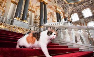 Эрмитаж расскажет, как живут музейные коты на самоизоляции