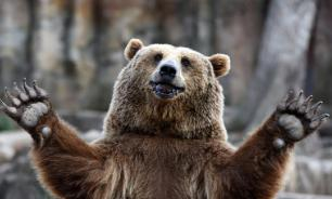 Более половины россиян считают, что медведь - символ России