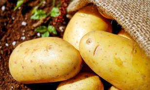 """Картофель спасется в """"Хранилище Cудного дня""""?"""