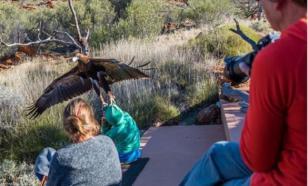 Маленького мальчика в Австралии пытался похитить орел