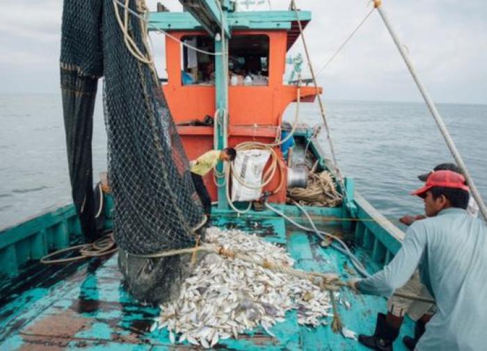 Азиатские рыбаки и фермеры увеличили продажи через Интернет