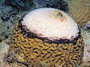 Кораллы совершенно не выносят мусора