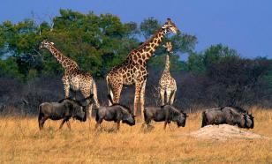 Шестерых французских туристов расстреляли в заповеднике в Нигерии