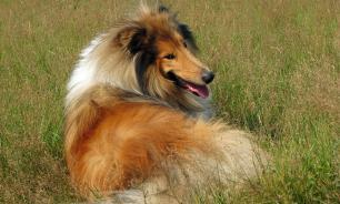 Собаки в городе: как выбрать породу для квартиры