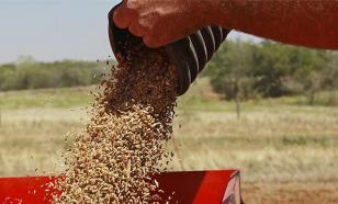 Эксперт: Санкции не помешают российскому экспорту пшеницы — кушать хочется всем