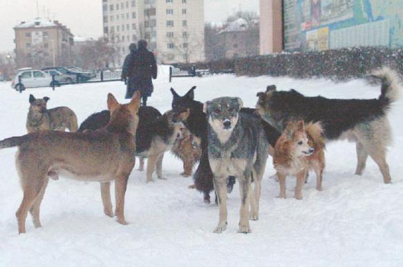 Депутат из Кировской области, возможно, охотился на собак