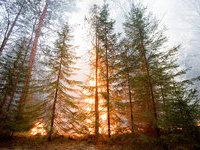 В связи с природными пожарами в Якутию вылетит глава Рослесхоза.
