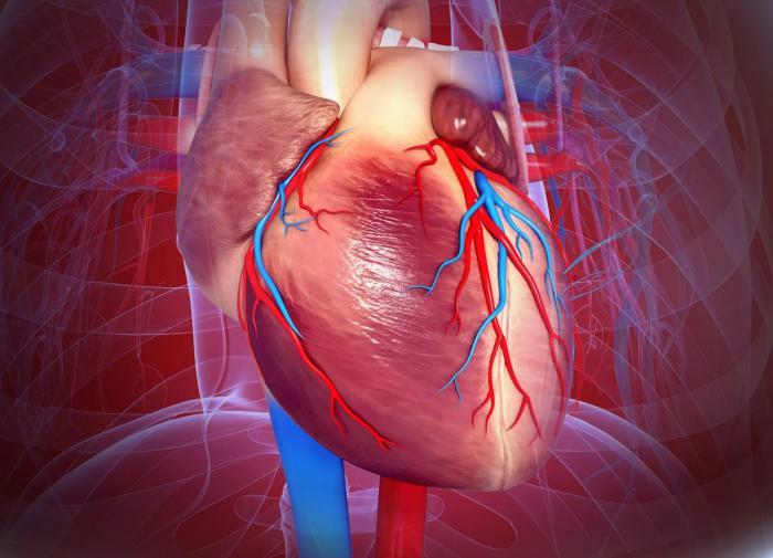 Учёный из США выявил самый полезный продукт для сердца