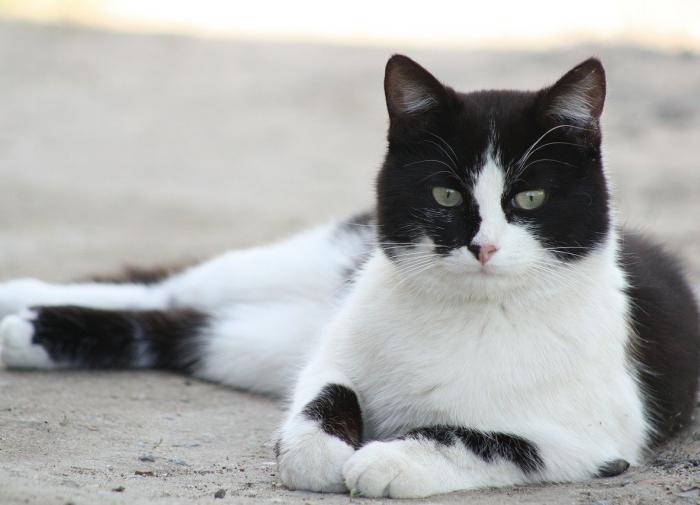Названы три способа не дать коту сбежать весной