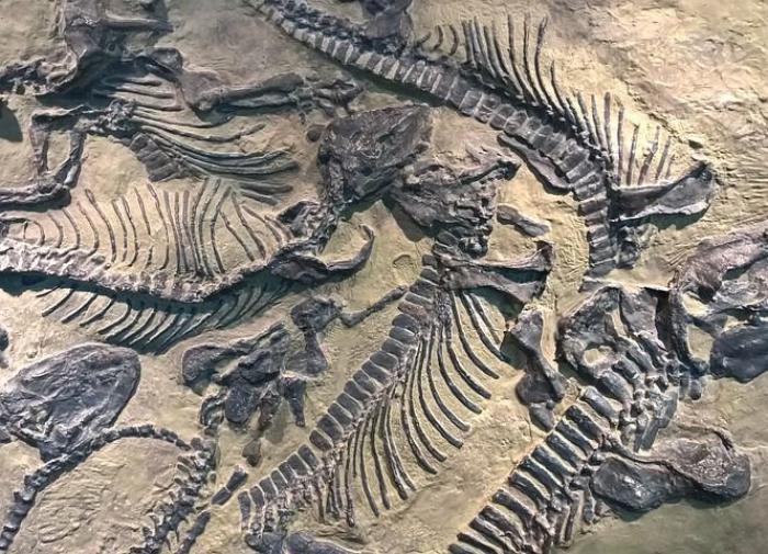 В Монголии обнаружили новый вид беззубых динозавров