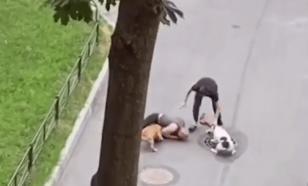 Петербуржец собой закрыл собаку от нападения агрессивных стафов