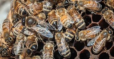 Эксперт: Людям стоит поучиться доброте и справедливости у пчел