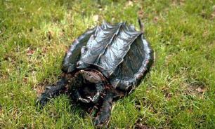 Американец поймал на удочку древнюю черепаху