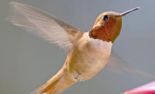 В Новой Зеландии обнаружили птицу, способную впадать в спячку