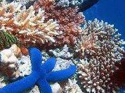 Коралловые рифы спасет электричество