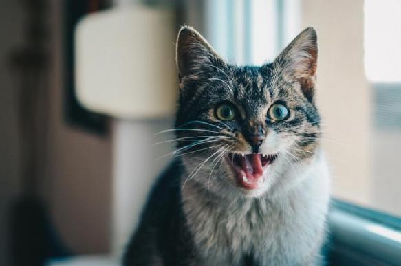 Злая кошка два дня не выпускала женщину из кухни