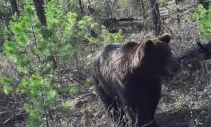 Дальнобойщик из Якутии, защищаясь от медведя, убил его ножом