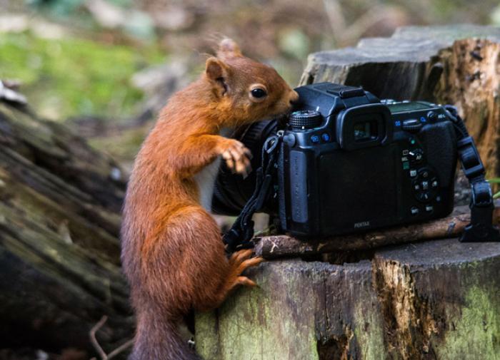 Спасатели помогли заблудившемуся в лесу Ленобласти фотографу