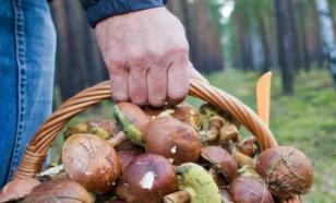 Съедобные грибы осенью становятся опасными для здоровья