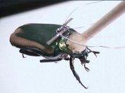 Пьезогенератор для жука-терминатора