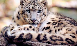 В Индии соседом семейной пары по номеру в гостинице стал... леопард