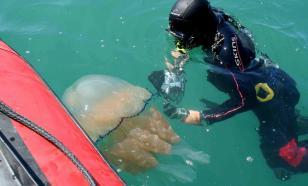 Пушков предложил Италии подать в суд на Украину из-за нашествия медуз
