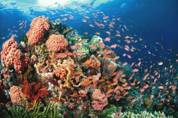 Океанолог объяснил, почему исчезают коралловые рифы