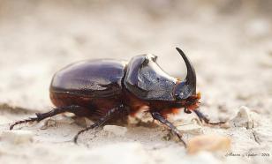 Создана камера, которую можно прикрепить к насекомому