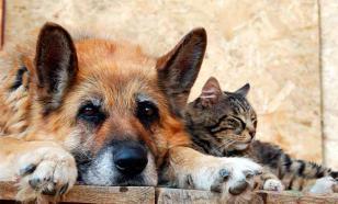 Зачем люди нападают на бездомных животных?